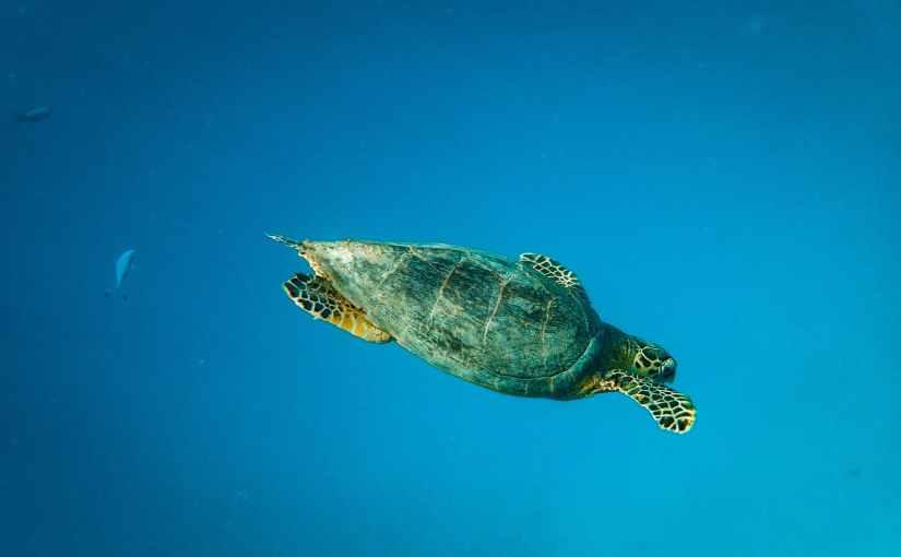 TortoiseSVN – 小烏龜與VisualStudio的無間合作